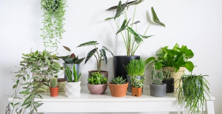 Humidify a room with houseplants